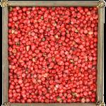 pimienta-rosa